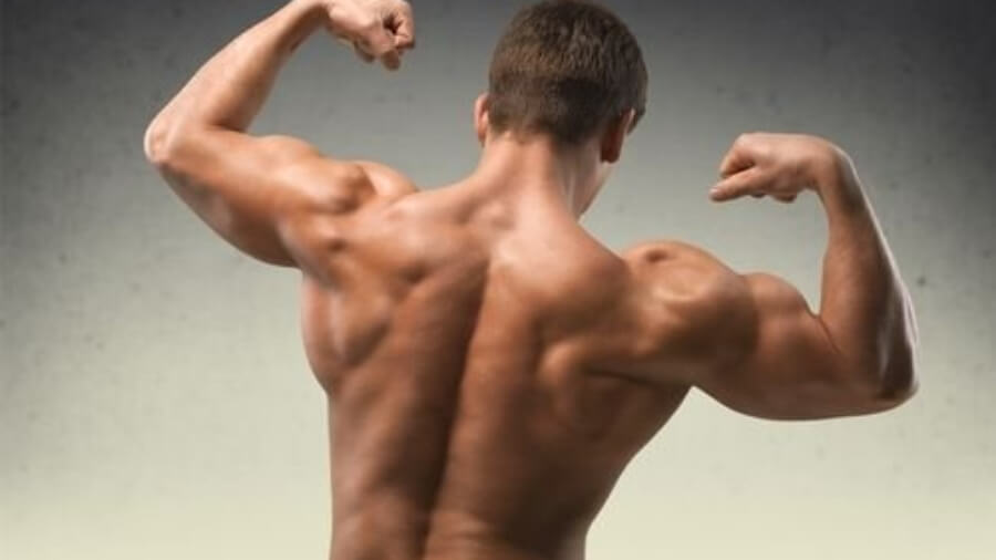 man-muscle-back_2048x2048