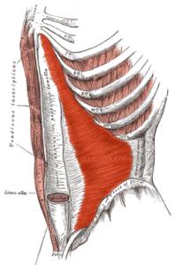 diastasis-recti-muscle