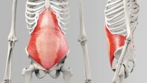 diastasis-recti-skeleton