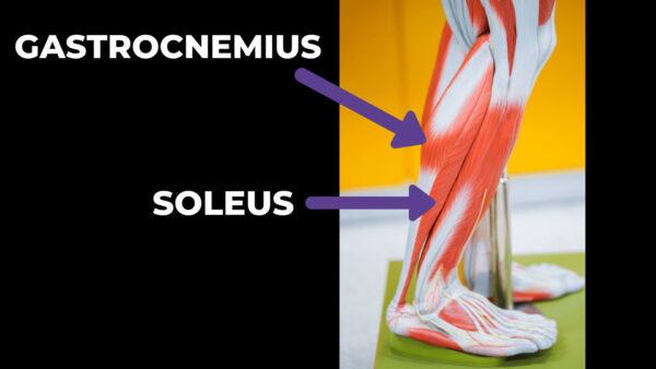 plantar-fasciitis-calf-muscles